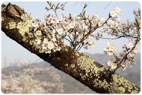 sayomaru26-488.jpg