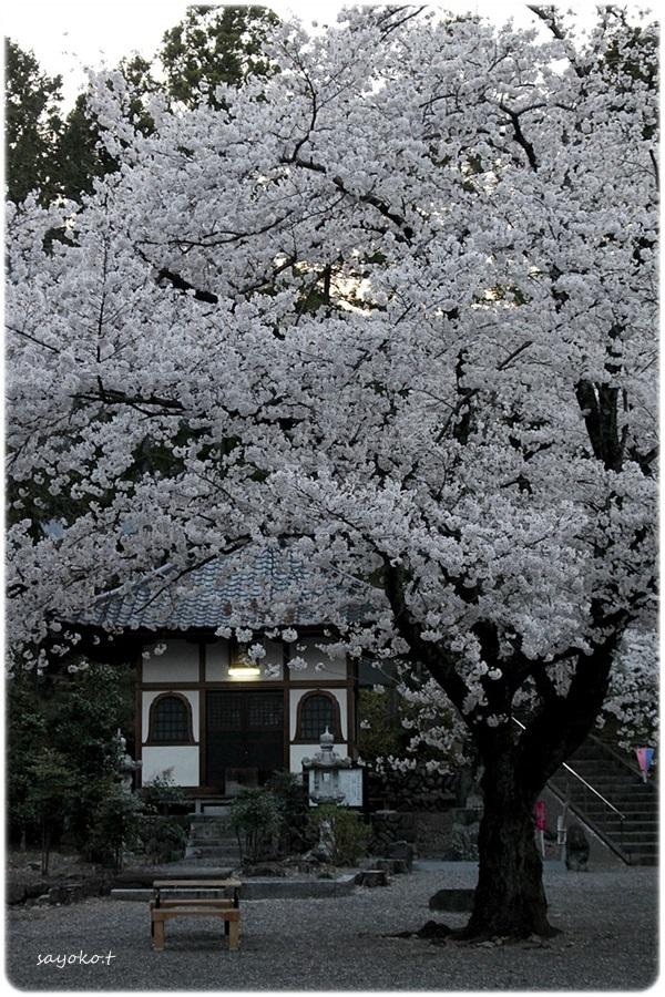 sayomaru26-499.jpg