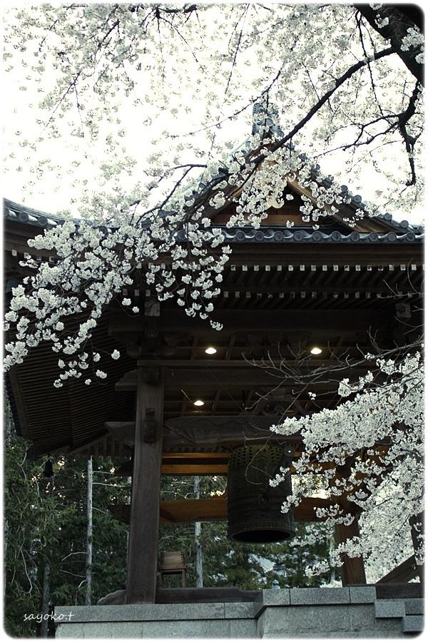 sayomaru26-507.jpg
