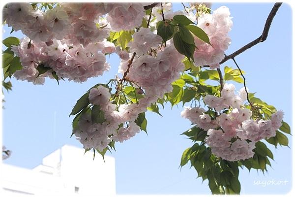 sayomaru26-523.jpg
