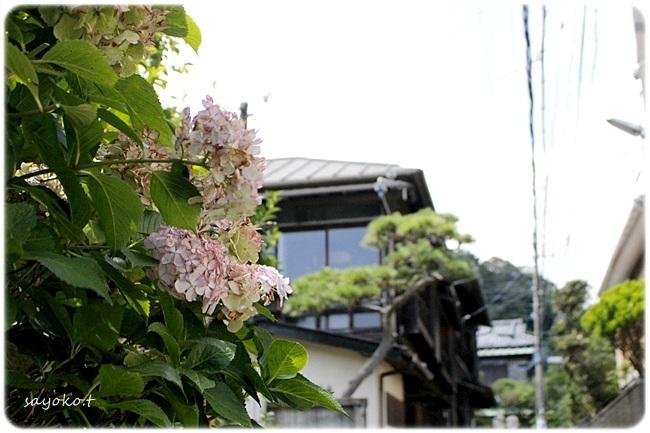 sayomaru27-365.jpg