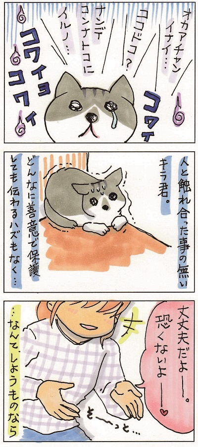 野良猫を保護するということ 2-3