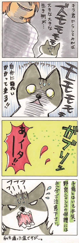 野良猫を保護するということ 3-3