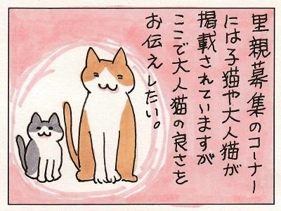 大人猫、どうですか。