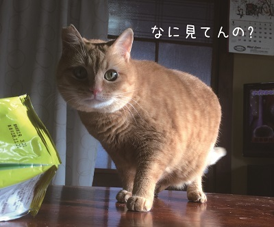茶子ちゃんが!!
