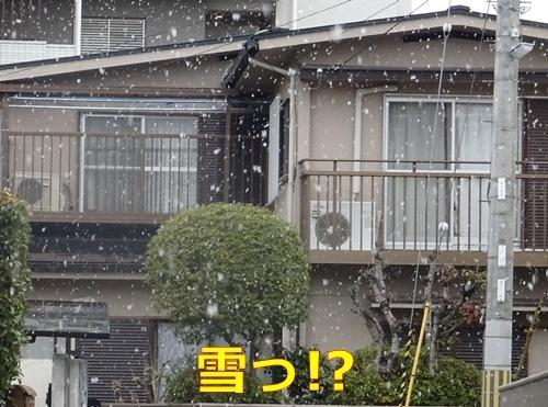 1吹雪いてる