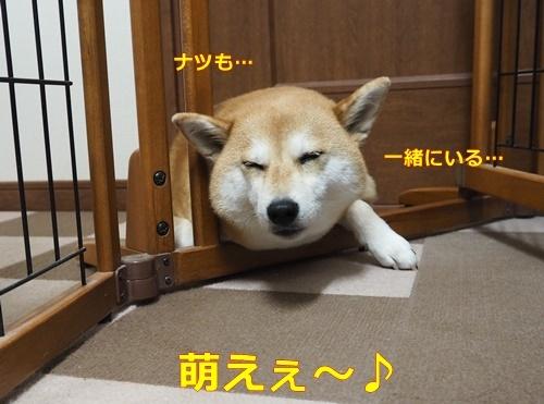 4眠いんかい