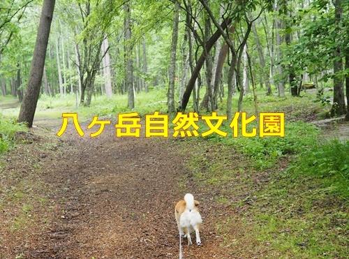 2八ヶ岳自然文化園
