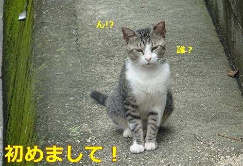 2ネコさん