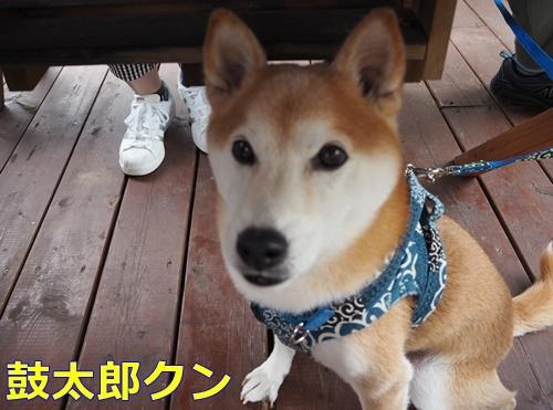 1鼓太郎君 - コピー
