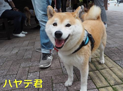 4ハヤテ君 - コピー
