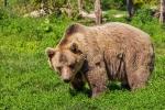 無料画像 熊