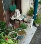 仲町商店街の猫ちゃん