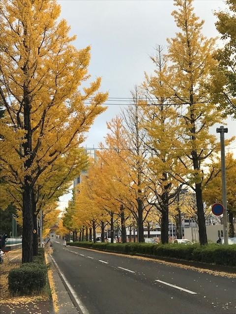 IMG_銀杏