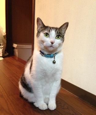 0418猫1IMG_1064