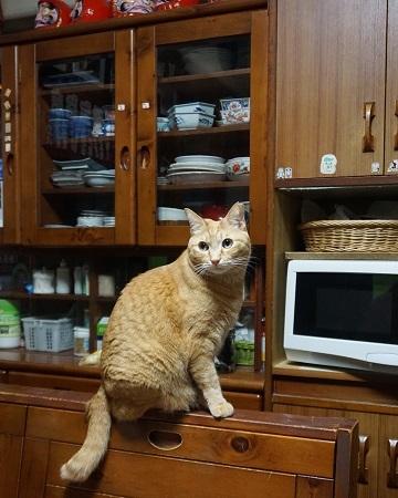 猫1DSC00133