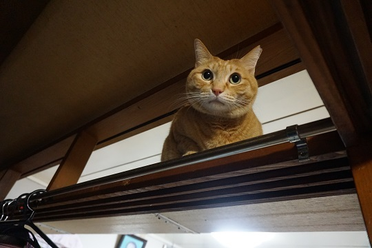 猫3DSC00050