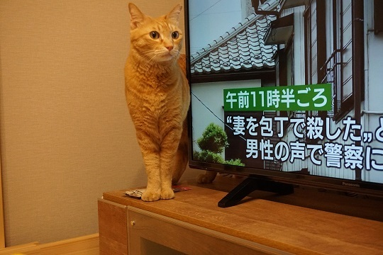 猫1DSC00961