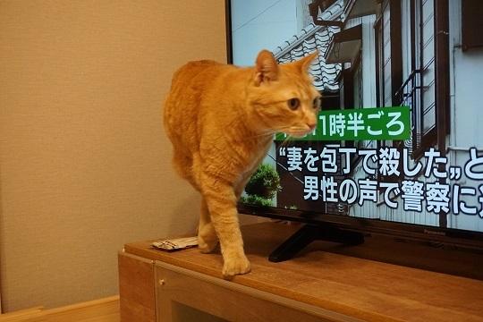 猫2DSC00964