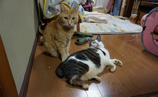 猫2DSC00183