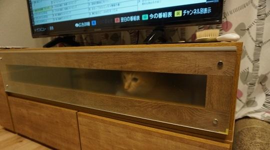 猫1DSC00924