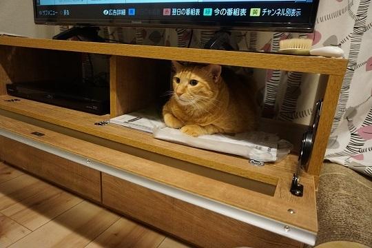 猫2DSC00920