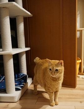 猫5DSC01228