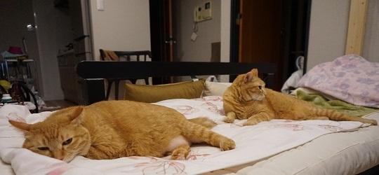 猫1DSC01254