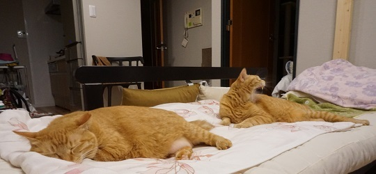 猫4DSC01268