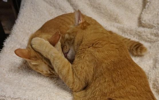 猫3DSC01403