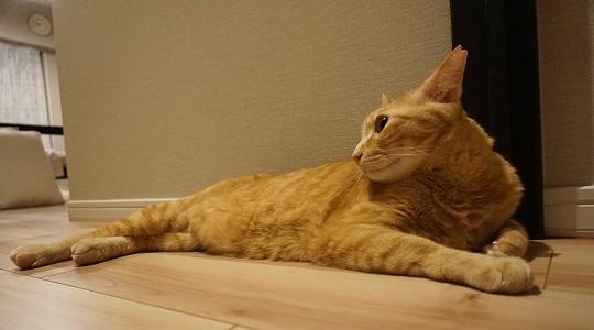 猫1DSC01609