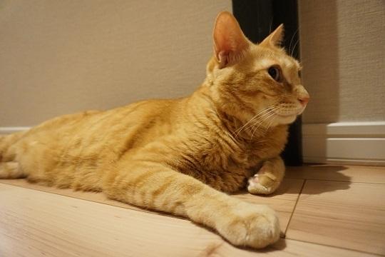 猫2DSC01625