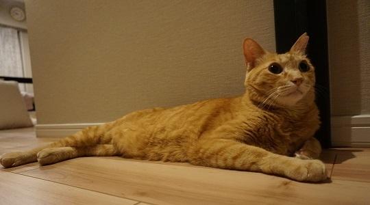 猫3DSC01615