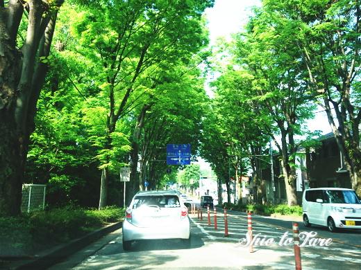 DSC_0053_20190504_02_鶴橋風月