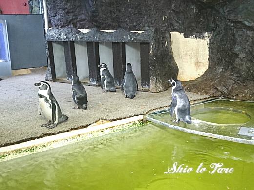 DSC_0034_20190806_02_sp_新屋島水族館