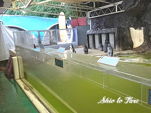 DSC_0036_20190806_02_sp_新屋島水族館