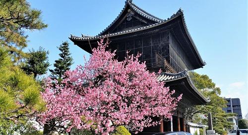 建中寺山門と梅