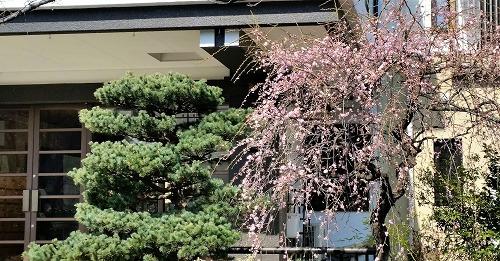 乗西寺境内の梅