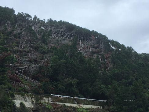 倒木に覆われた山_R01.07.14撮影