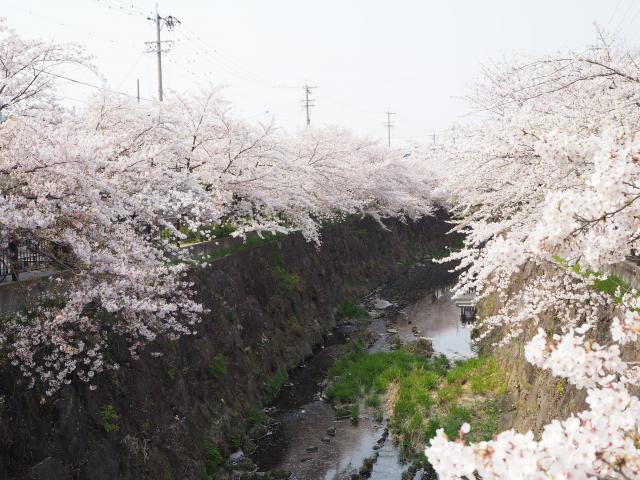 yamazakigawa20190407-7_convert_20190417163359.jpg