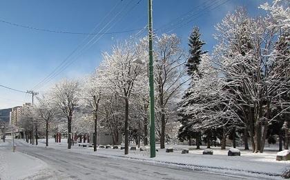 冬になりました