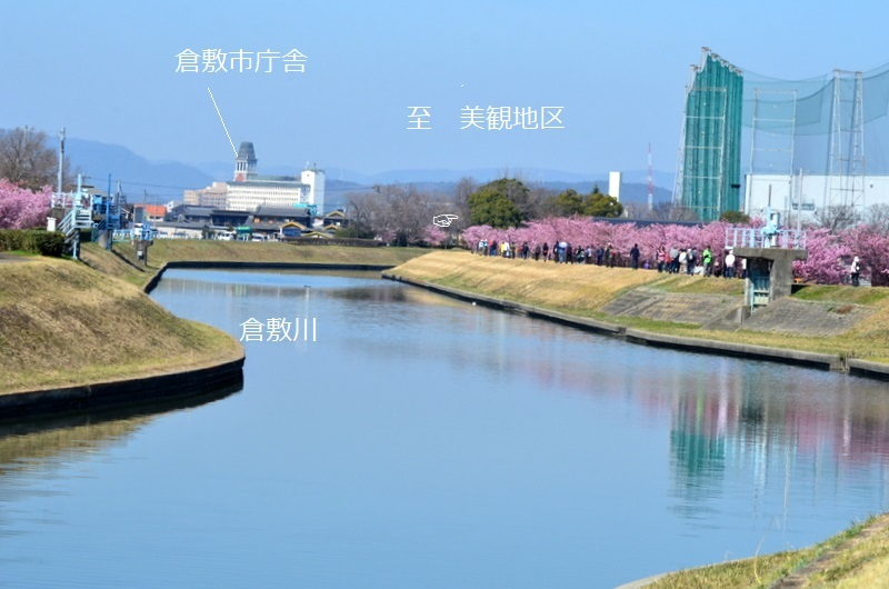 河津桜_0092