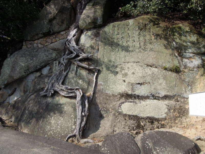 岩割れの松 - コピー