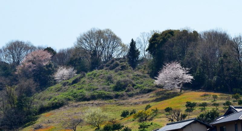 DSC_0627山里桜