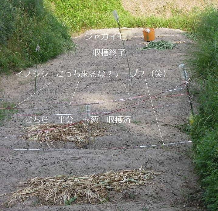 DSCN1591収穫後