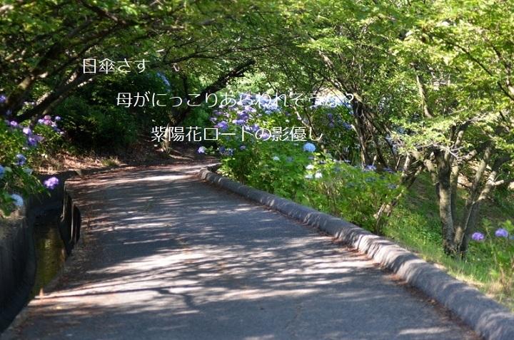 紫陽花ロードDSC_2364