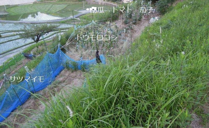 大町下DSCN1680-001