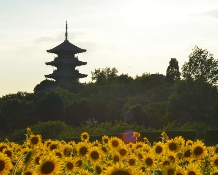 塔とヒマワリDSC_2609-