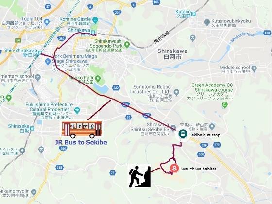 20190407白河関山イワウチワ (560x420)
