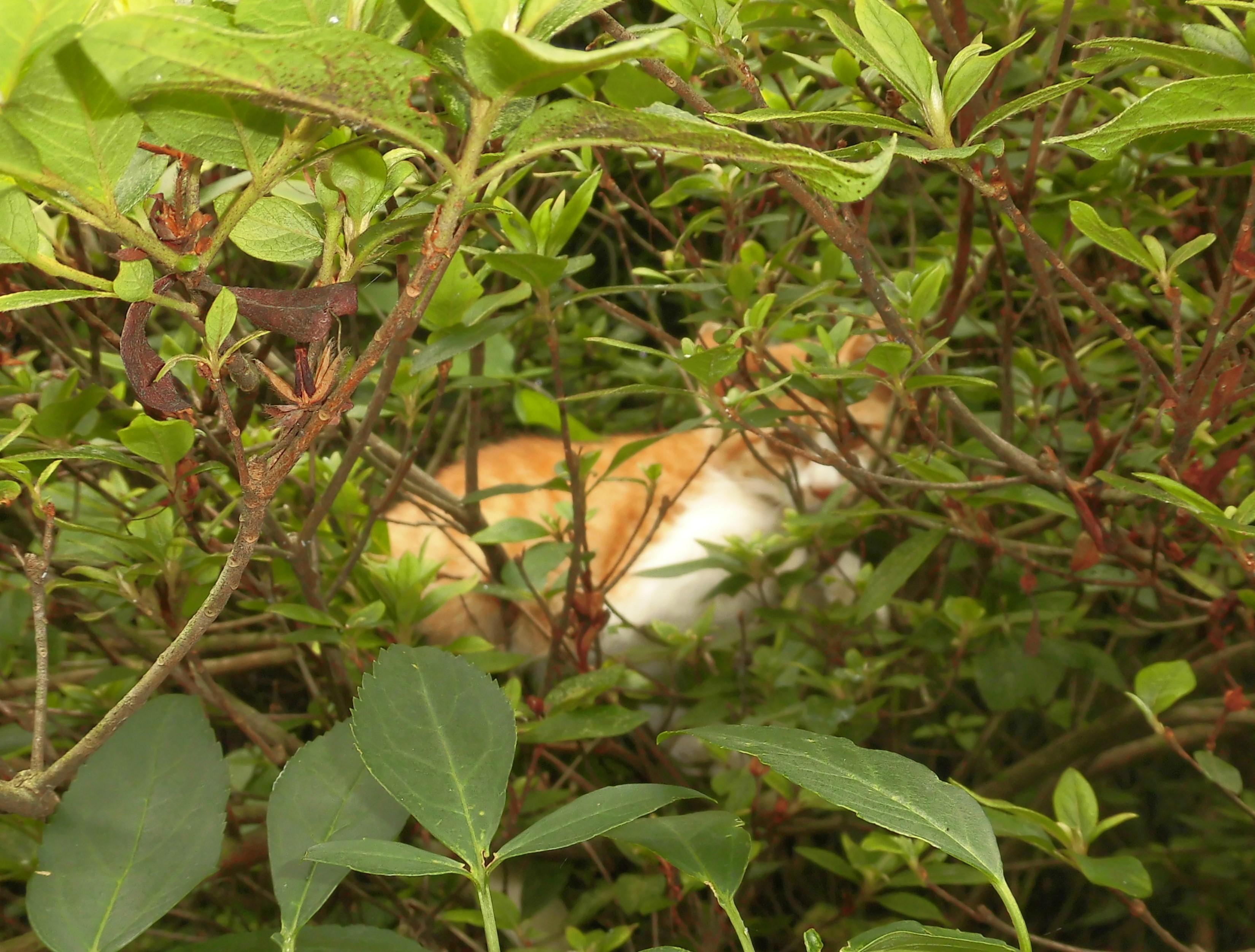 仔猫の寝姿